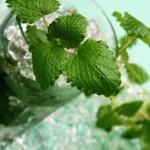 коктейль мохито рецепт
